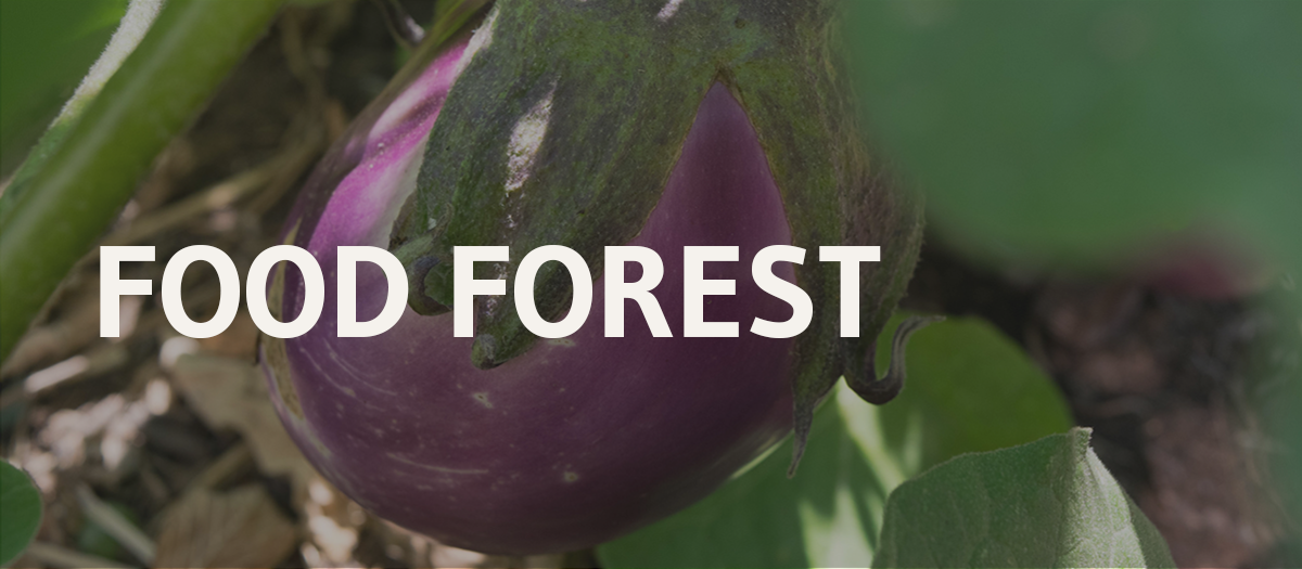 Feature story image, Food Forest Banner