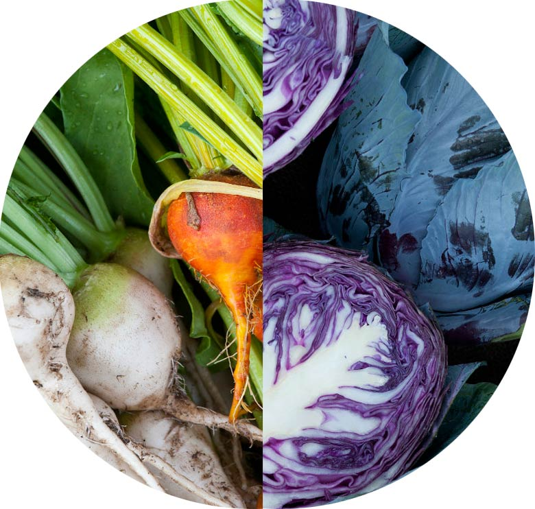 A circle made of half red cabbage and half root vegetables